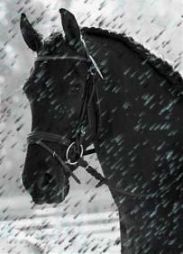 ~Rain~