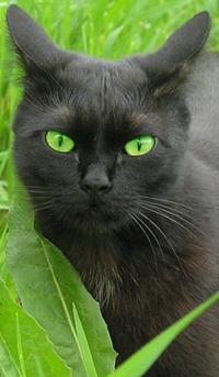 Черногривка