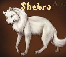 Шебра
