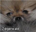 Зигервальд