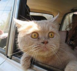Cat Auf dem Richtigen Weg