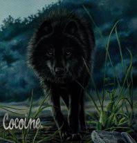 cocoine
