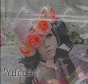 'yuccas