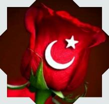 Aynur Turkgul