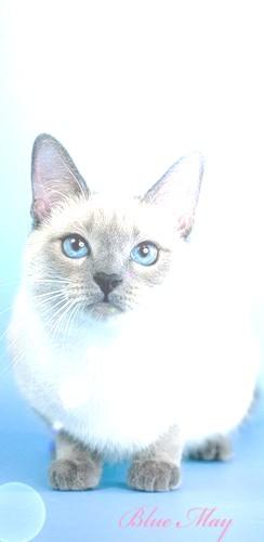 ~Blue May~