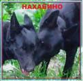 Алексей из Нахабино