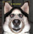 Evgeny_NK