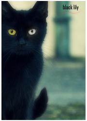 Черная Лилия
