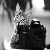 Штрих кот
