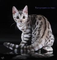 Тигрохвостая