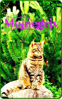 Молнегрив