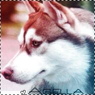Agella