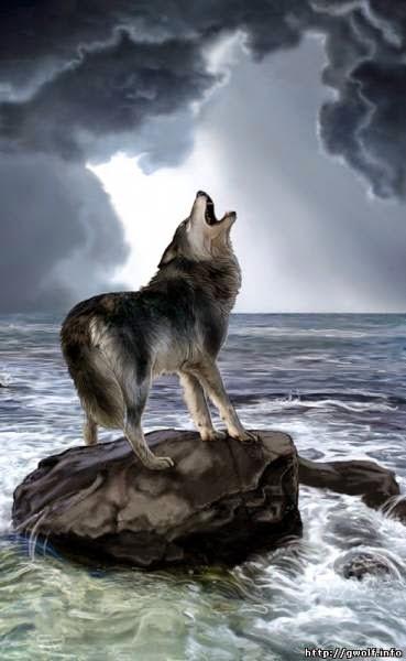 wolf vintyr2