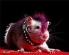 rat_lady