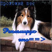 Прохожий пёс