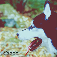'choco