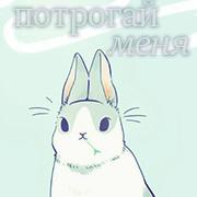 white rabbit.