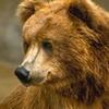 Medved1982
