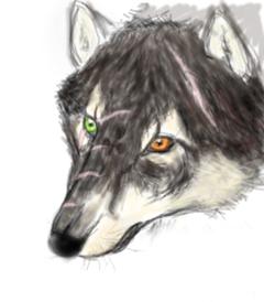 заключённый волк