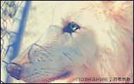 ;лень