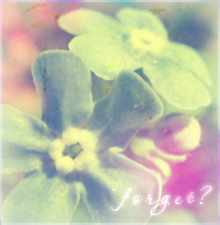 .forget-me-not