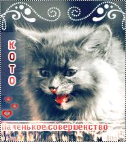kotoxxx