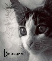 Берёзка