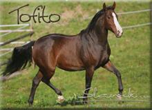 Tofito