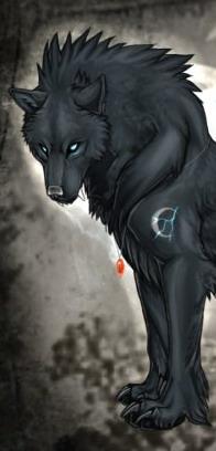 Acute Canine