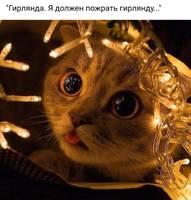 cat2140