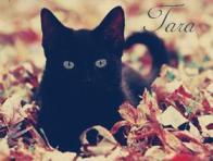 Tara aka Indigo Cat