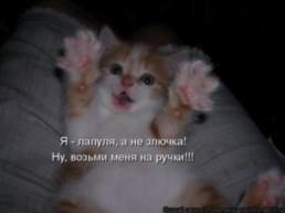 ирk@ =)))