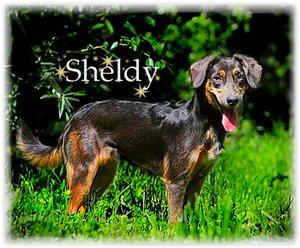Sheldy