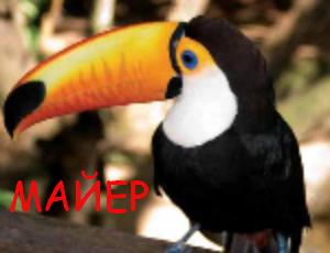 Майер