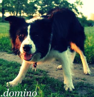 .domino
