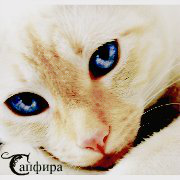Сапфира
