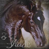 o`Shade