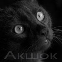 Акшок