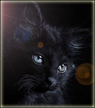 Огненая Кошка