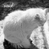 `wind