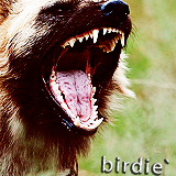 birdie`