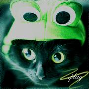 .meow