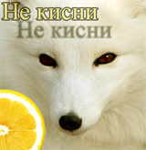 citron polar fox