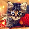 Anutka_cat