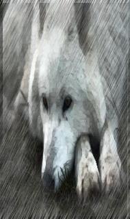 Серый Дождь