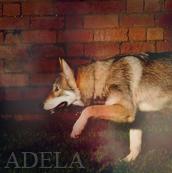 Адела