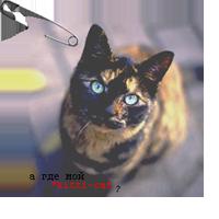 *kitti-cat