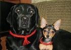 Дана и Нелли