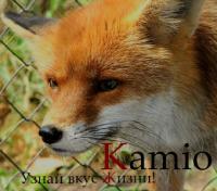 Kamio;