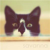 .savannah